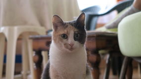 Stunned cat Stock Photos