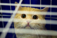 Stunned cat. The photo shows stunned cat in the cell Stock Photography