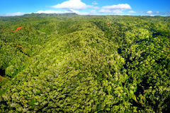 Stunning aerial view of spectacular jungles, Kauai Royalty Free Stock Photos