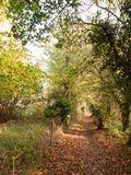 Stunning autumn country path way fence field trees leaves Stock Images