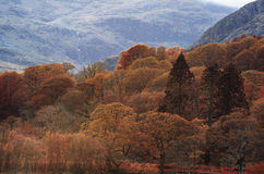 Stunning Autumn Fall color landscape of Lake District in Cumbria Royalty Free Stock Photos