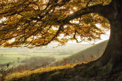 Stunning Autumn morning sunlight lights landscape through golden Royalty Free Stock Photography