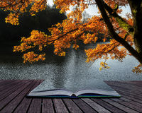 Stunning backlit Autumn golden tree with lake in background conc Stock Photo