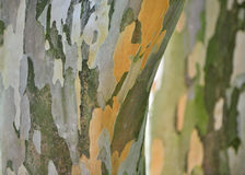Stunning Bark Texture Royalty Free Stock Photography