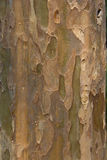 Stunning Bark Texture Royalty Free Stock Photos
