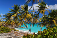 Stunning Beach at Bottom Bay Barbados. Tropical palm trees, azure ocean, true paradise Royalty Free Stock Photos
