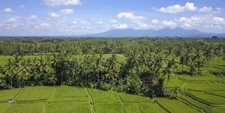 Stunning beautiful landscape aerial view of Bali rice field and jungle palm tree farm with volcano Agung in the background in agri. Culture scenic and Asia Royalty Free Stock Image