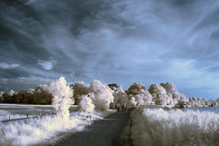 Stunning beautioful unique infra red landscape with false color Royalty Free Stock Photography