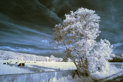 Stunning beautioful unique infra red landscape with false color. Stunning unique infra red landscape with false color impact Stock Images