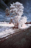 Stunning beautioful unique infra red landscape with false color Stock Photo