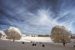 Stunning beautioful unique infra red landscape with false color Stock Images
