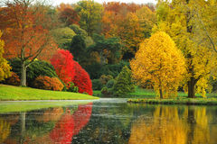 The stunning beauty of autumn in England. Colourful trees are reflected in a peaceful lake, england in the fall Royalty Free Stock Photo