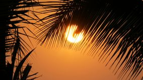 Stunning beauty of the red sunset of a large sun against the backdrop of palm leaves. The stunning beauty of the red sunset of a large sun against the backdrop stock video