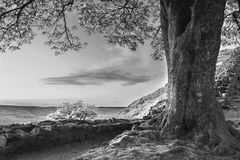 Beautiful black and white landscape image of Sycamore Gap at Had. Stunning black and white landscape image of Sycamore Gap at Hadrian`s Wall in Northumberland at Royalty Free Stock Photo