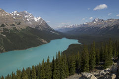 Stunning Blue Lake. Peyto Lake in Banff National Park, Canada Stock Photos