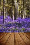 Stunning bluebell flowers in Spring forest landscape with wooden Royalty Free Stock Photography