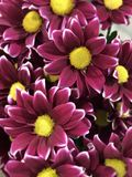 Bouquet of purple flowers stock photography