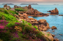 Atlantic ocean coastline with colorful flowers and cliffs, Ploumanach, France Stock Photography