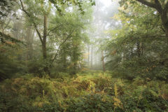 Stunning colorful moody vibrant Autumn Fall foggy forest landsca Stock Photography
