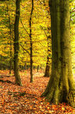 Stunning colorful vibrant Autumn forest Royalty Free Stock Image