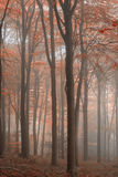 Stunning colorful vibrant evocative Autumn Fall foggy forest lan Royalty Free Stock Images