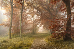 Stunning colorful vibrant evocative Autumn Fall foggy forest lan Stock Images