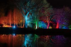 Stunning colourful floodlit tree at night. Colourful floodlit trees reflecting on a lake at night at RHS Garden,Harlow Carr,Harrogate,North Yorkshire,England,UK royalty free stock photos
