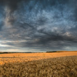 Stunning countryside landscape wheat field in Summer sunset Royalty Free Stock Image