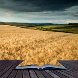 Stunning countryside landscape wheat field in Summer sunset conc Stock Photos