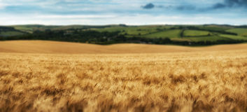 Stunning countryside landscape wheat field in Summer sunset Stock Images