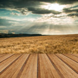 Stunning countryside landscape wheat field in Summer sunset with Royalty Free Stock Photos