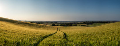 Stunning countryside panorama landscape wheat field in Summer su Stock Photo