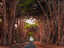 Famous Cypress Tunnel in California. Stunning Cypress Tree Tunnel at Point Reyes National Seashore, California, United States. Fairytale trees colored red by the Royalty Free Stock Photography