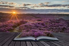 Stunning dawn sunrise landscape image of heather on Higger Tor i Stock Photo