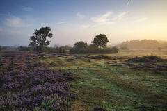 Stunning dawn sunrise landscape in misty New Forest countryside Royalty Free Stock Photo