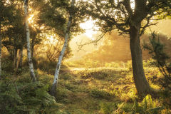 Stunning dawn sunrise landscape in misty New Forest countryside Stock Photography