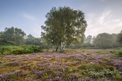 Stunning dawn sunrise landscape in misty New Forest countryside Stock Images