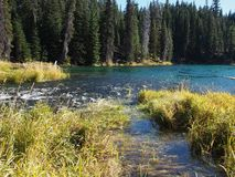 Stunning Deschutes River waters. The beautiful waters of the Deschutes River in the forests of Oregon royalty free stock photography