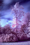 Stunning false color infrared forest landscape image Stock Photo