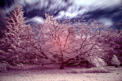 Stunning false color infrared forest landscape image Royalty Free Stock Photo