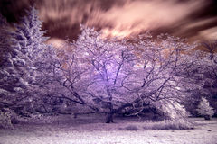 Stunning false color infrared forest landscape image Royalty Free Stock Image