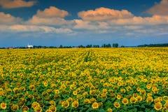 Stunning field of sunflowers and cloudy sky,Buzias,Romania,Europe Stock Photos