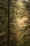 Stunning fine art landscape image of Winter forest landscape in Peak District in England. Beautiful fine art landscape image of Winter forest landscape in Peak royalty free stock image