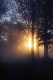 Stunning foggy landscape Royalty Free Stock Image