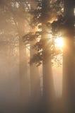 Stunning foggy landscape Stock Photos