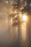 Stunning foggy landscape with trees Royalty Free Stock Images