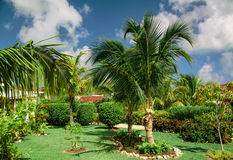 Stunning, gorgeous amazing view of tropical garden on sunny summer day Stock Photography
