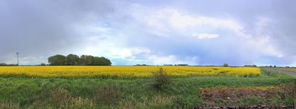 Stunning high resolution panorama of a northern german agricultural landscape on a sunny day with white cloud formations on a blue. Sky royalty free stock images