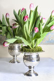 Stunning huge bouquets of pink tulips in silver antique vases Stock Images