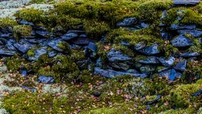 Image of slate stones among moss. Stunning image of slate stones among moss on a wonderful winter day in of the Belgian Ardennes royalty free stock photos